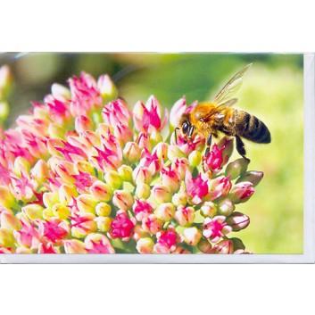 Skorpion Glückwunschkarte; 115 x 175 mm; ohne Text; Fotomotiv: Blume mit Biene; Ku: weiß, naßklebend, Spitzklappe; Querformat; 491851