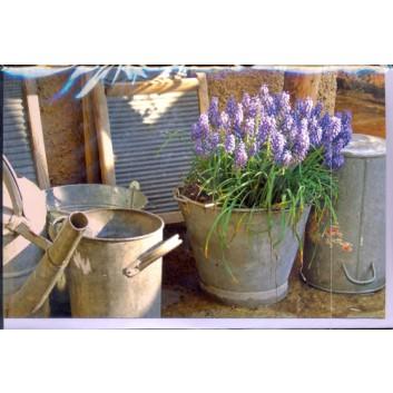 Skorpion Glückwunschkarte; 115 x 175 mm; ohne Text; Fotomotiv: Frühlingblüten, lila; Ku: helllila, naßklebend, Spitzklappe; Querformat; 95219