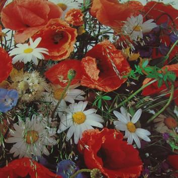 Lack-Geschenkpapier, extrafest; 70 x 100 cm; Wildblumen (Mohnblume); gelb-grün-orange-weiß-flieder; Lackpapier,extrastark-hochglänzend,glatt