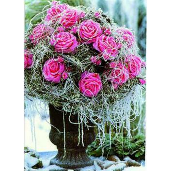 Sü Glückwunschkarte, ohne Text; 115 x 165 mm; Fotomotiv: Rosen vereist in einer Schale; rosa-weiß; LC_W021; Hochformat